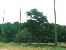 ゴルフ練習場のネット張り替え